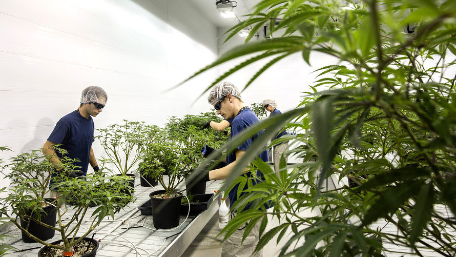 Canopy Growth Corp. grows its marijuana at a facility in Smith Falls, Ontario, Canada.